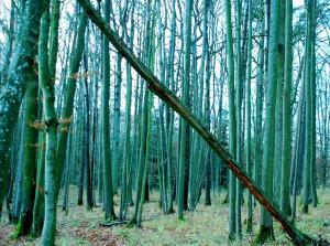 Manchmal sieht man den Wald vor lauter Bäumen nicht